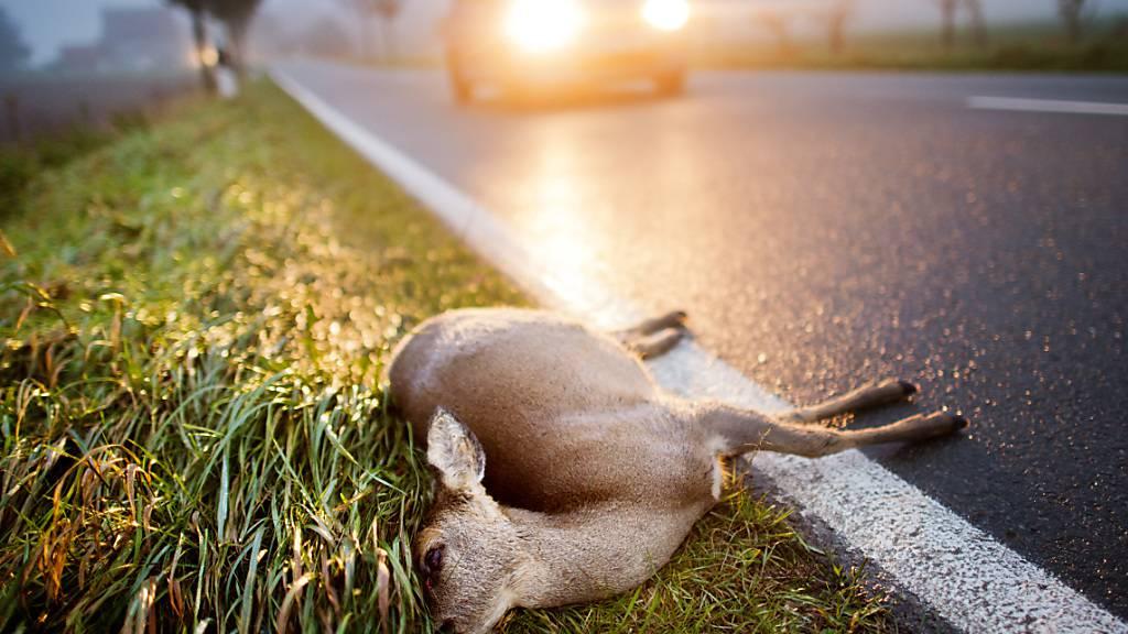 Der Versicherer Axa Winterthur schätzt den Sachschaden bei Kollisionen zwischen Fahrzeugen und Wildtieren jährlich schweizweit auf rund 50 Millionen Franken. Mehrere tausend Tiere im Jahr werden in den Unfällen verletzt. (Archiv)