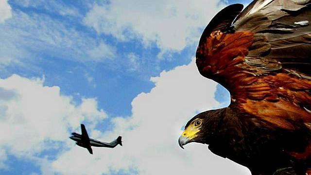 Vögel können die Flugsicherheit gefährden (Symbolbild)