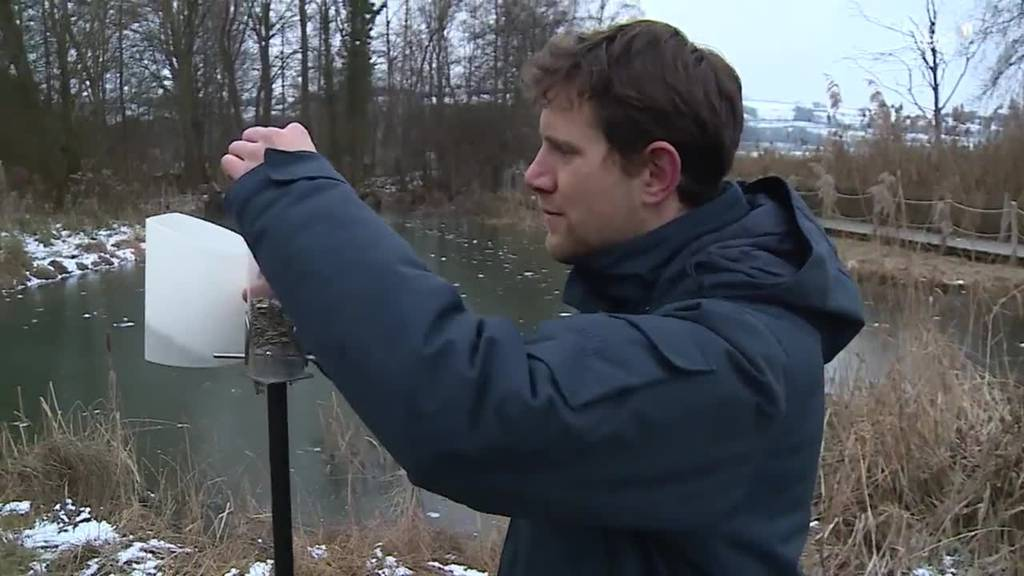 Vögel im Winter / Tierarzt-Besuch im Tierheim