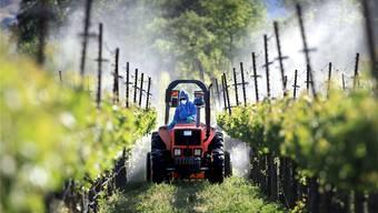 In ganz Europa ist man bemüht den Gifteinsatz im Weinanbau drastisch zu reduzieren. Doch dazu müssen die Reben robuster werden.John Burgess/AP/Keystone