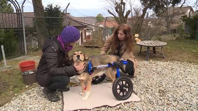 Rollatoren für Hunde: «Wer das nicht versteht, sollte die Freude der Tiere sehen»