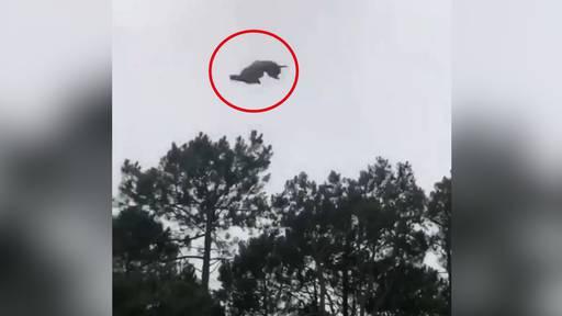 Lamm aus Helikopter in Pool geworfen: Hausbesitzer muss sich vor Justiz erklären