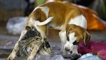 Hundehalter sind glücklicher als Katzenhalter, besagt eine neue Studie.