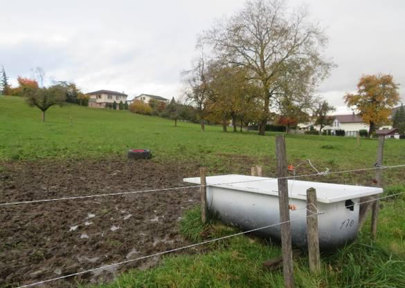 Auch auf dieser Wiese weiden jeweils die Kühe im Beriker Oberdorf.