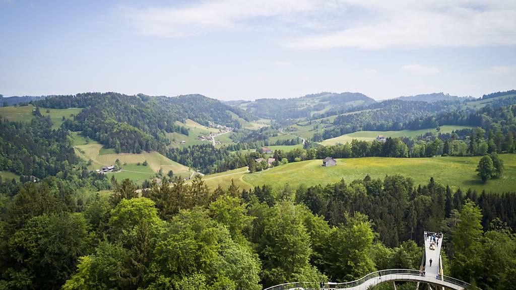 Blick über die Hügellandschaft des Neckertals vom Baumwipfelpfad aus: Die St. Galler Regierung will für die Fusion der drei Gemeinden Oberhelfenschwil, Neckertal und Hemberg mit 11,7 Millionen Franken bereit stellen. (Archivbild).