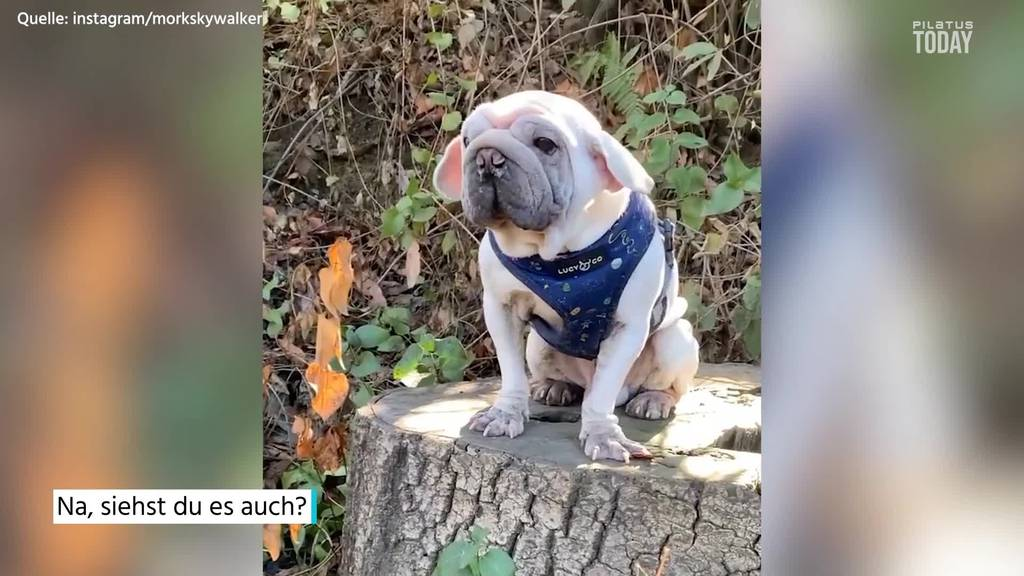 Dieser Hund sieht aus wie Baby Yoda