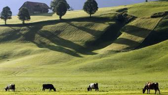 Das idyllische Bild trügt: Schweizer Milchbauern leiden derzeit unter den tiefen Preisen. Urs Flüeler/Keystone