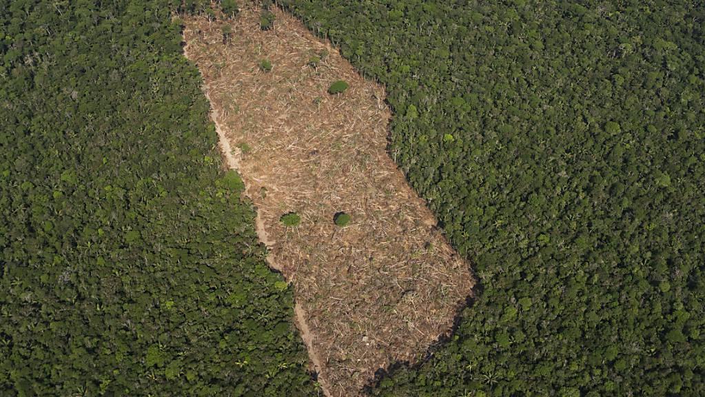 Blick auf ein abgeholztes Waldstück im Amazonasgebiet. (Archiv)