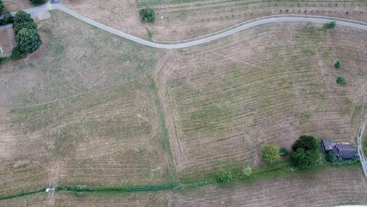 Die Felder waren teils braun. Wegen der Trockenheit wuchs fast nichts mehr.