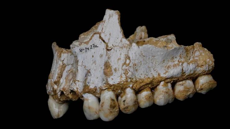 Neandertaler-Oberkiefer aus El Sidron (Spanien) mit Plaque auf dem hintersten Molar (Backenzahn).Paleoanthropology Group MNCN-CSIC