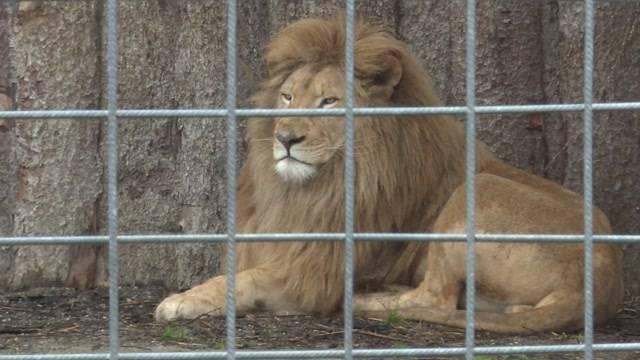 Tiere aus Subinger Raubtierpark kommen in den Jura