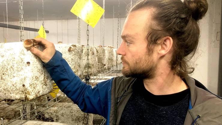 Jean-Noël Gertz züchtet Pilze in einer stillgelegten Tiefgarage in Paris.
