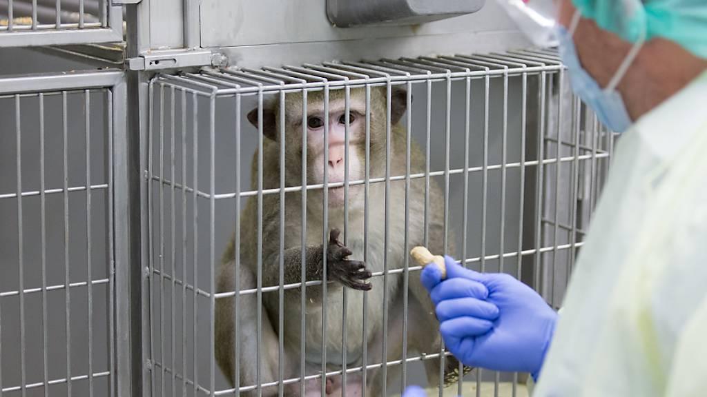 Bundesrat gegen Initiative zum Verbot von Tierversuchen