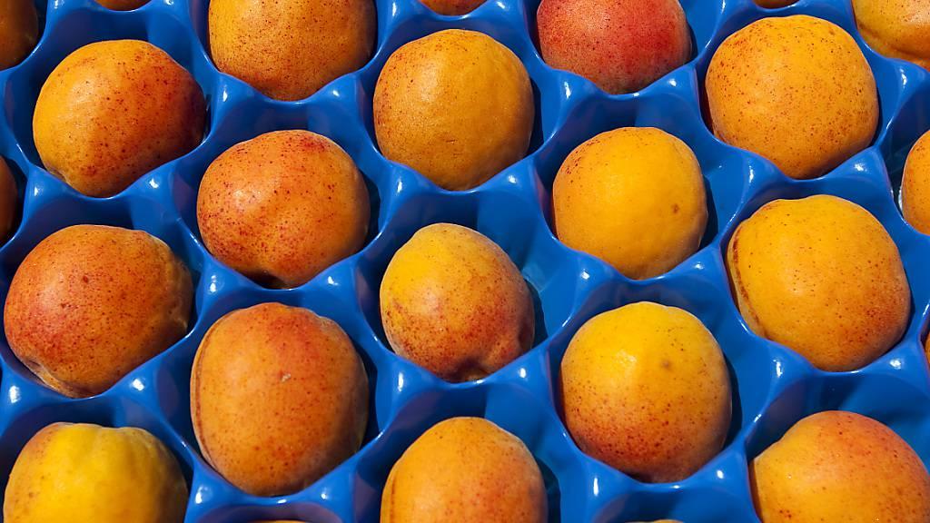 In den Frostnächten im April sind im Wallis noch mehr Aprikosen vernichtet worden als zunächst angenommen worden war. (Archivbild)