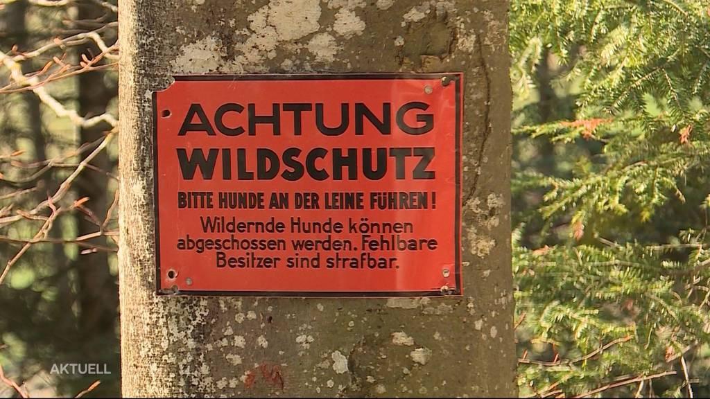 Wegen fehlender Hundeleine: Strafbefehl für Schäferin