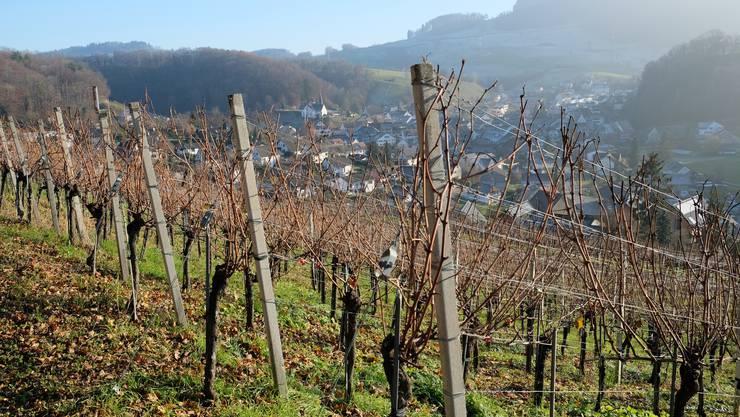Die Fachstelle Rebbau der Kantone Schaffhausen, Thurgau und Zürich rechnet damit, dass viele Winzer deswegen bald nicht mehr flüssig sind.(Symbolbild)