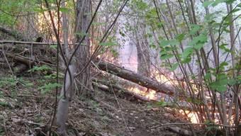 Der Waldbrand wurde in einem Grosseinsatz von der Feuerwehr gelöscht.