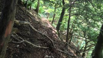 12-jähriger Schüler stürzt in Wald bei Sulz zu Tode (Juli 2013)