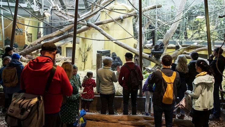 Vom gelockerten Veranstaltungsverbot profitierten auch Kinos und Zoos: Am 6. Juni erhielten die Tiere im Zürcher Zoo wieder Besuch.
