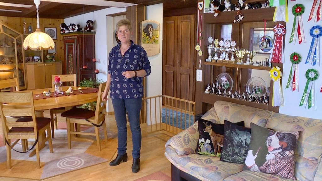 Monika zeigt «ihres Dihei» und ihre Berner Sennenhunde