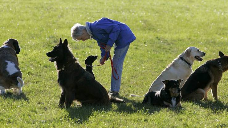 Neuhalter von grossen und massigen Hunden sollen weiterhin ein Hundekurs absolvieren müssen.