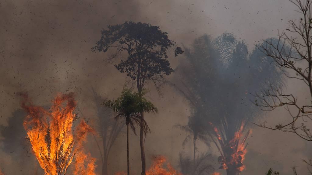 Amazonas-Gebiet verzeichnet schlimmste Juni-Brände seit 14 Jahren