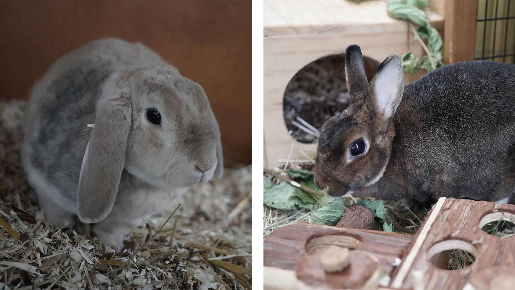 Kaninchen Pele & Puk