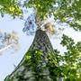 Bildergalerie zur Zukunft des Waldes