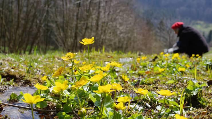 Quellen gehörten somit zu den am meisten bedrohten Lebensräumen in der Schweiz.
