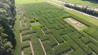 So wäre es nur bedingt einfacher: Das Würenloser Maislabyrinth aus der Vogelperspektive.