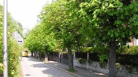 Seit über 50 Jahre prägen elf (heute noch zehn) Kastanienbäume das Bild des Badener Strässchens im Roggebode.