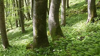Wald im Muotathal