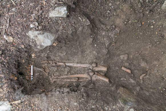 Die unteren Extremitäten des Skeletts blieben im Erdreich stecken.