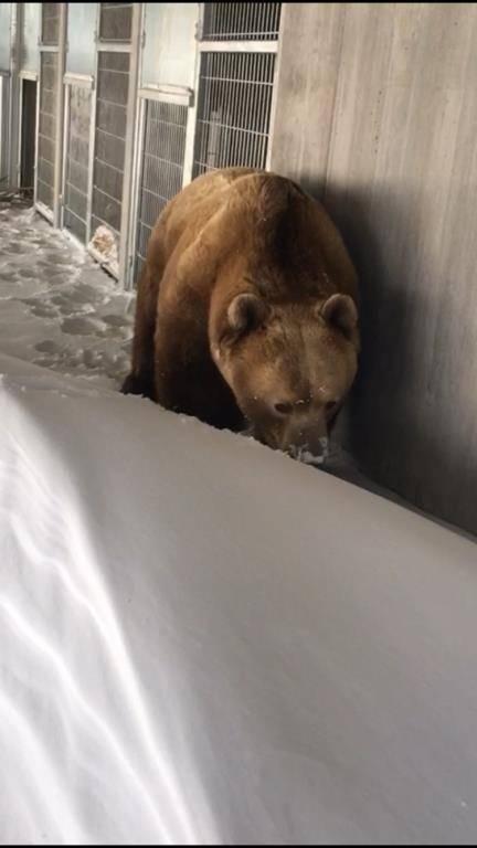 Er hat sichtlich Freude am Schnee.