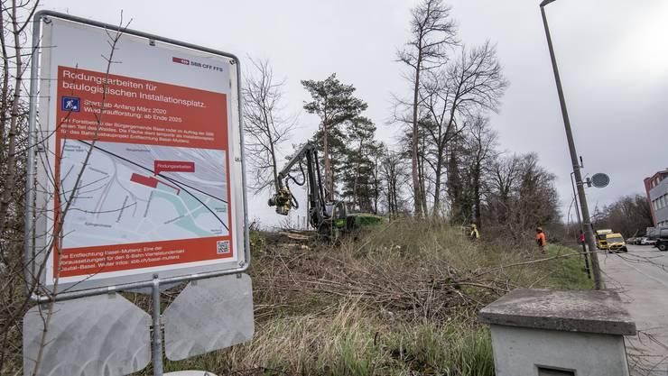 Die SBB brauchen beim Muttenzer Bahnhof Platz für die Baulogistik – das Gebiet soll wieder aufgeforstet werden.