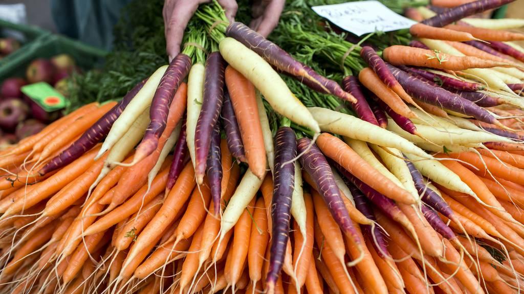 Karotte viele Farben