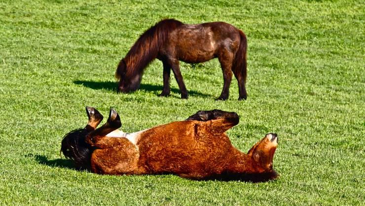 Auch das Pferd geniesst die warme Sonne auf dem Bauch.