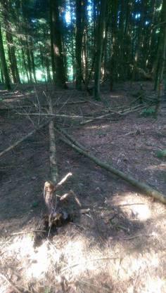 Deponierte Bäume auf einem Waldweg