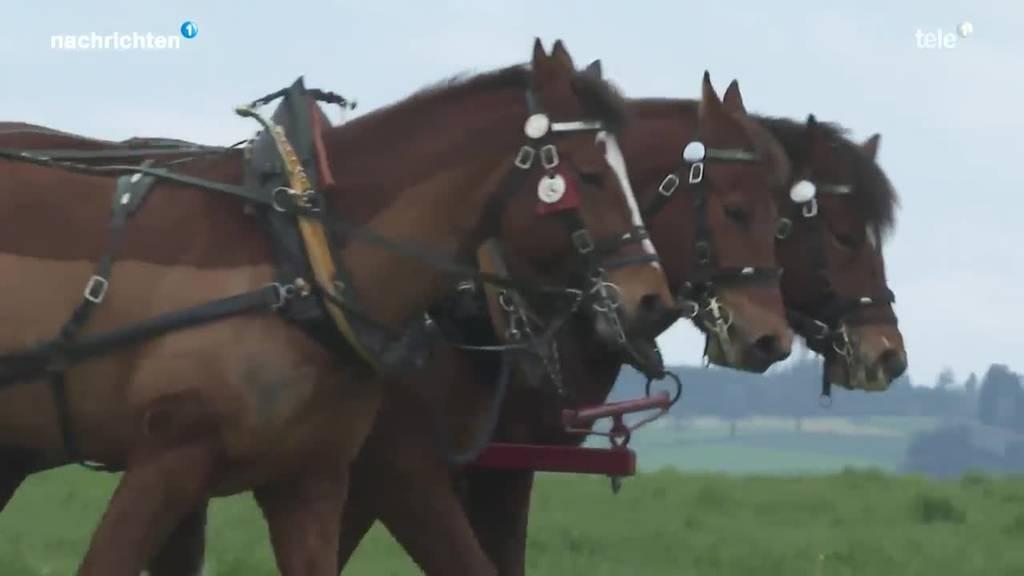 Pferd statt Traktor wieder im Trend