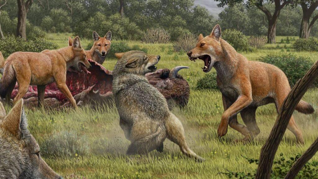 Eine künstlerische Darstellung eines Streits zwischen zwei Wölfen und einem Rudel «Schattenwölfe» um einen Bisonkadaver. Die Tiere waren entgegen bisherigen Vermutungen nicht nahe miteinander verwandt.