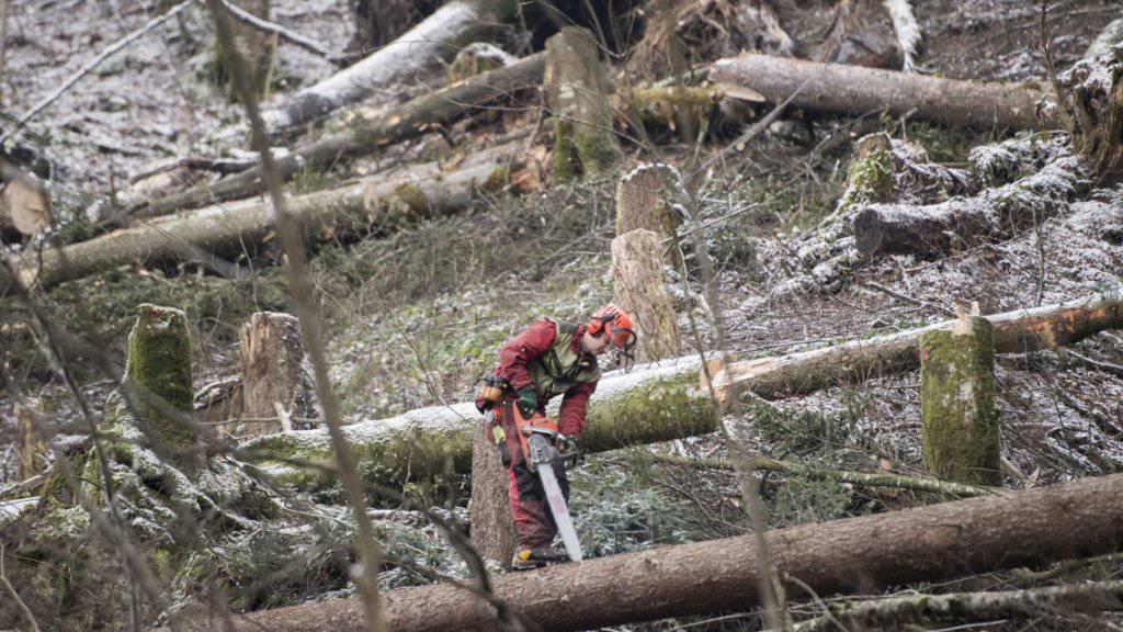 Im Kanton Bern sind die Sturmschäden fast bewältigt: Ein Forstarbeiter beim Aufräumen. (Archivbild)