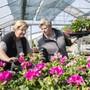 Das Unterengstringer Gartencenter Hoffmann bereitet sich auf die Wiedereröffnung vor. Bild: Keystone (Unterengstringen, 16. April 2020)