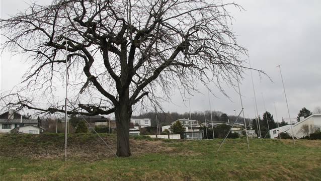 Auch beschauliche Limmattaler Gemeinden wie Uitikon spüren das Bevölkerungswachstum. FUO