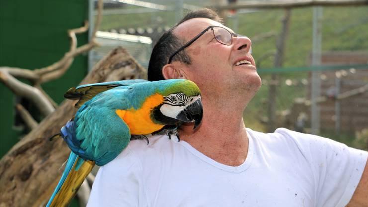 Seine Passion gilt den Vögeln: Rolf Lanz, Leiter des Vogelparks Ambigua, und ein Gelbbrustara. Dennis Kalt