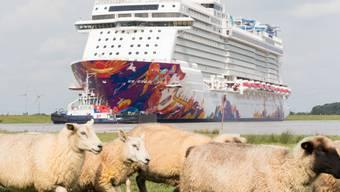 """Das Schiff """"World Dream"""" wird auf der schmalen Ems in die Nordsee überführt."""