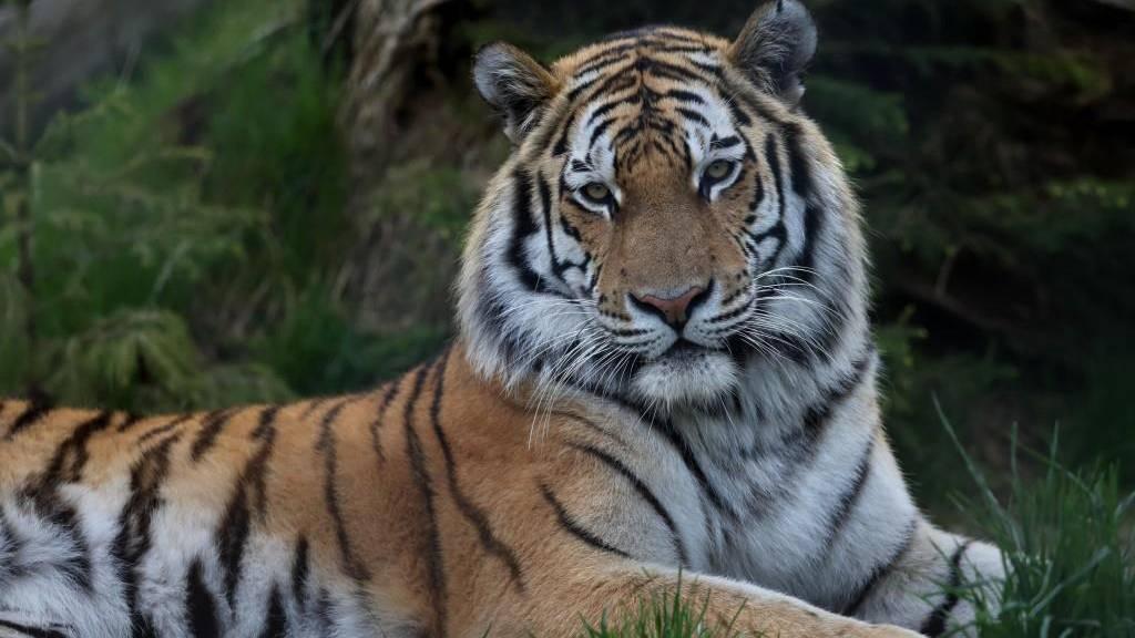 Private und Vereine sammeln für ihren Gossauer Zoo