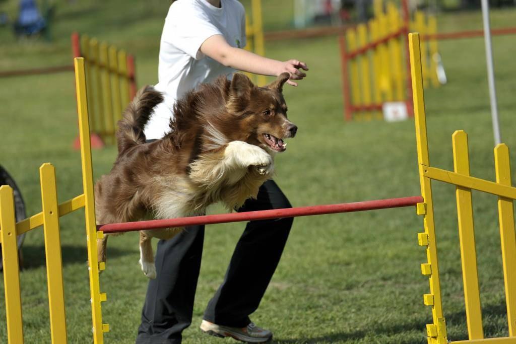 In Weinfelden finden die Hundesport-Schweizermeisterschaften statt. (Bild: iStock)