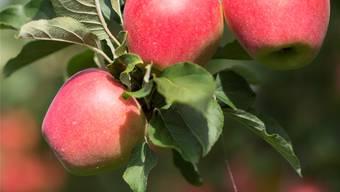 Apfel ist nicht gleich Apfel: Auf die kleinen Details kommts an.