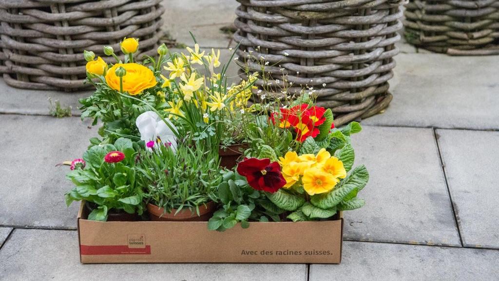 Jetzt kannst du Pflanzen nach Hause bestellen und Gärtner unterstützen