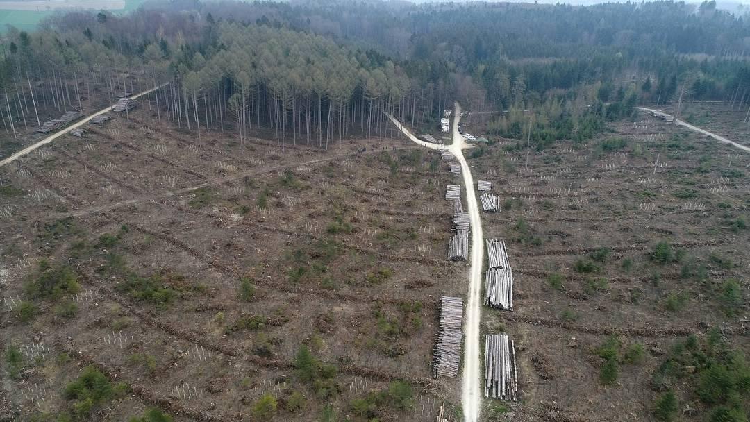Drohnenflug: So sieht der Wald bei Kestenholz ein Jahr nach Sturm Burglind aus.